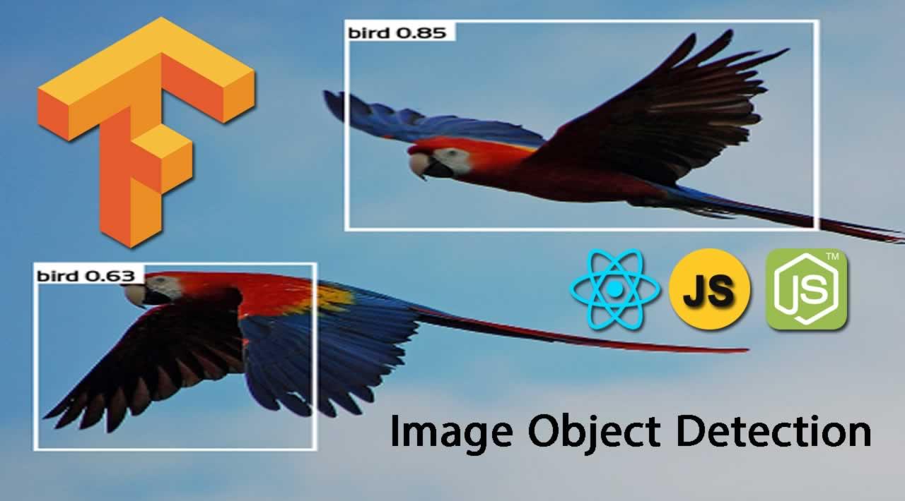 Image Object Detection using TensorFlowjs